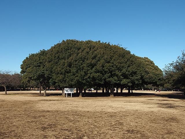 岸根公園写真